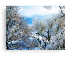 Frozen Trees 2 Canvas Print