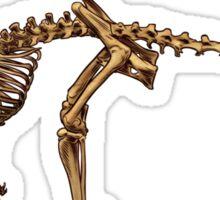 Kangaroo Skeleton Sticker