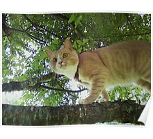 """""""Cat in Tree"""" Poster"""