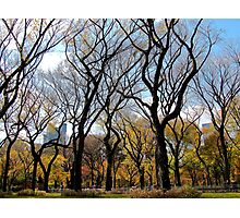 Sky trees, Autumn in Central Park - NYC Photographic Print