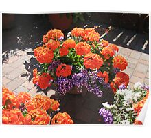 The Glory of Geraniums Poster
