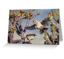 Desert Heat -- Cactus Wren Greeting Card