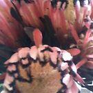 Flowers (detail) by Joan Wild