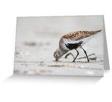 Mini Clam Gun -- Dunlin Greeting Card