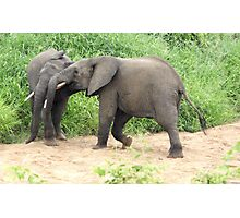 The Victor - Kruger National Park Photographic Print