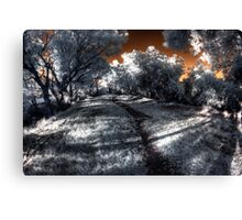Evening walk along the Canning River Canvas Print