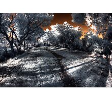 Evening walk along the Canning River Photographic Print