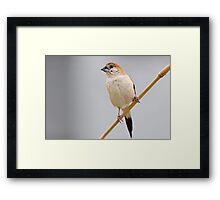 Silver Bill Framed Print