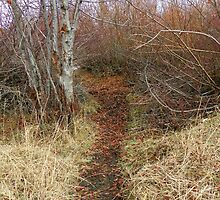 River Path by BettyEDuncan