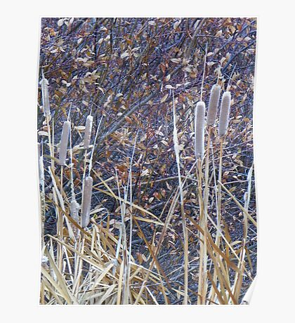 Fading Cattails Poster