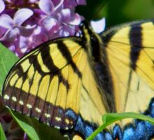 Eastern Tiger Swallowtail And Lilacs Sticker