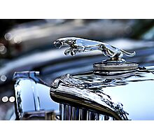 Silver Jaguar Photographic Print