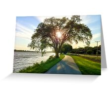 Light within the Trees Greeting Card