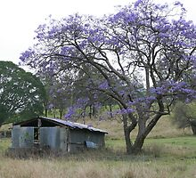 Jacaranda Tree beside a Ruin on Mt Barney by aussiebushstick