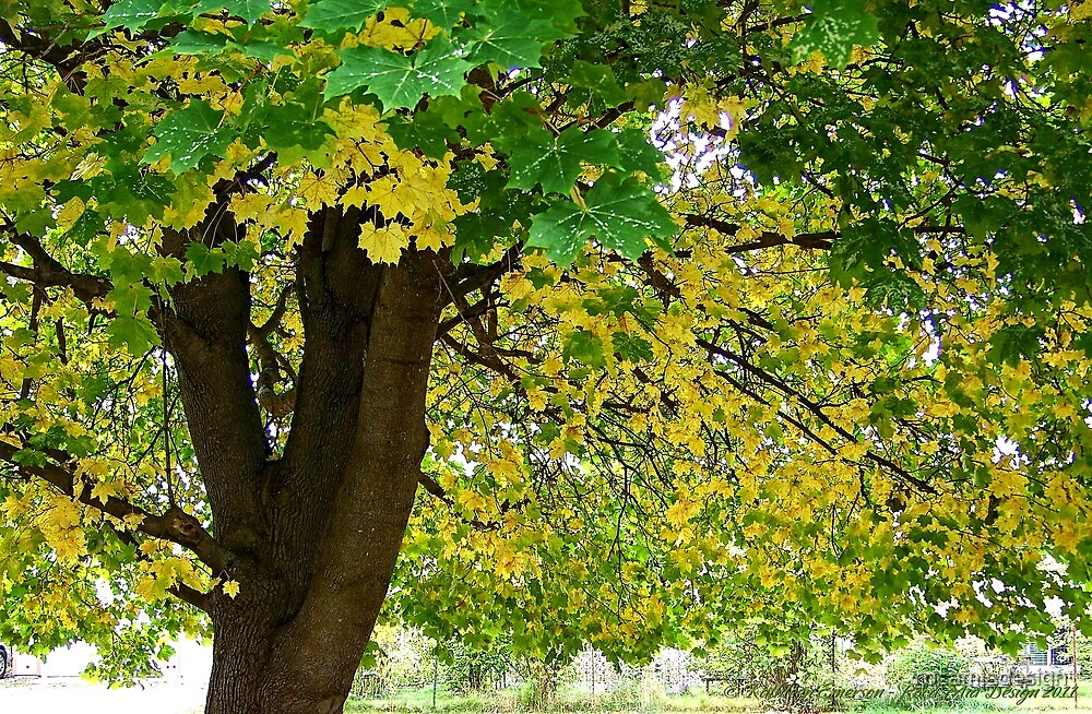 Yellow Autumn by rocamiadesign