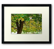 Yellow Autumn Framed Print