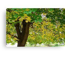 Yellow Autumn Canvas Print