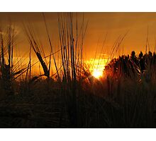 Sunset on a wheat field Photographic Print