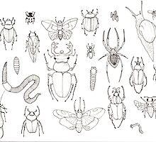 insects by Rebekka  Schönefuß