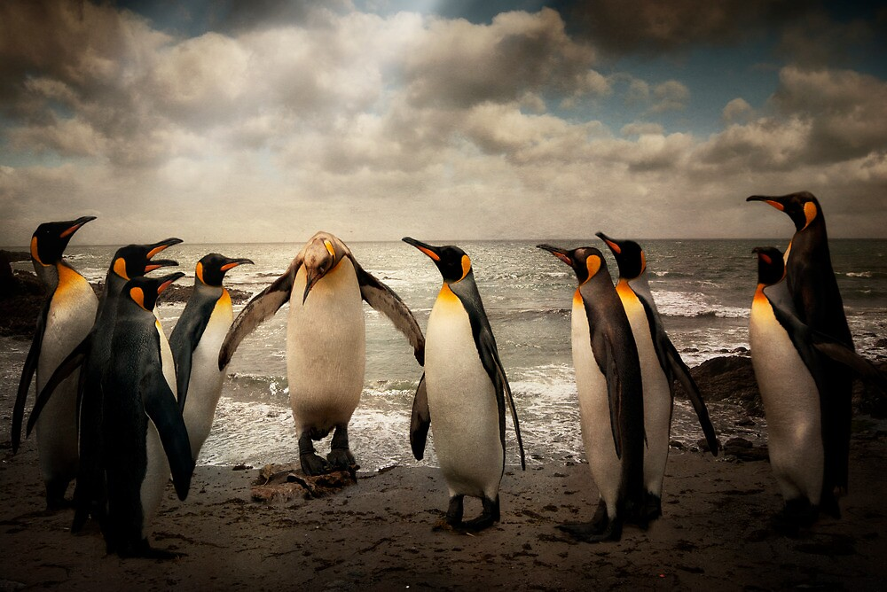 Penguins at the beach by ajgosling