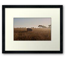 Foggy Beef Framed Print
