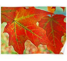 Fiery Foliage  Poster