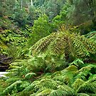 Ferny River by pennyswork