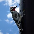 Metal Woodpecker in Toronto by dgscotland