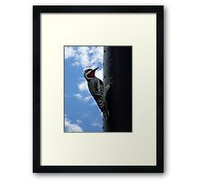 Metal Woodpecker in Toronto Framed Print