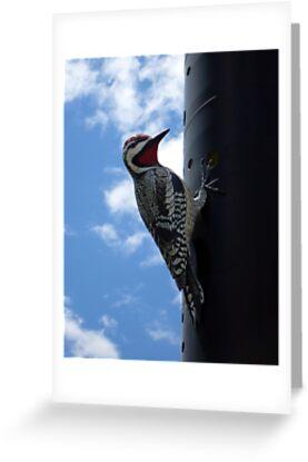 Metal Woodpecker in Toronto by dgscotland