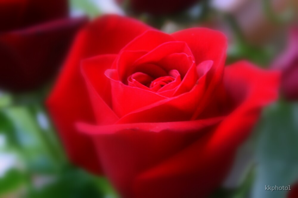 The Last Rose Of Summer by kkphoto1
