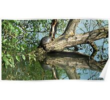 terrapin on a tree Poster