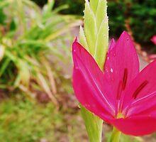 Flower. by Beth Mackelden