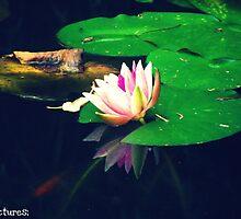 Waterlily by Beth Mackelden