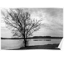 Lonely Tree in Black & White Poster