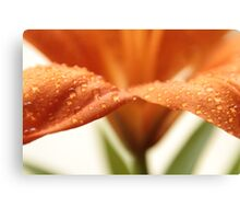 Close-up Lilly Canvas Print