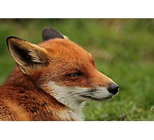 Fantastic Fox Photographic Print