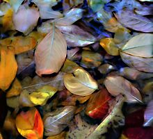 Fallen Leaves  by Don Wright