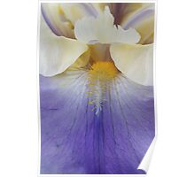 Iris 1  Poster