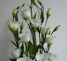 White Eustoma, Lisianthus (Display) by Anita  Fletcher