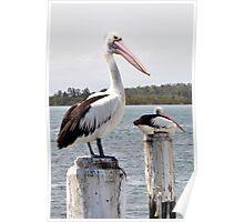 Mr Pelican Poster