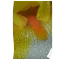 flower petal detail raindrops 1  Poster