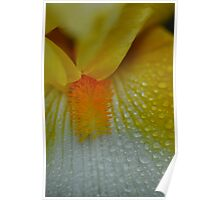 Yellow Flower raindrops abstract 2 Poster