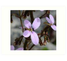 Trigger plant Stylidium laricifolium Art Print