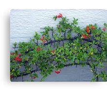 Cotoneaster Canvas Print