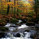 Autumn - Kennel Vale. by AndyReeve