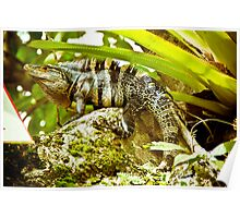 Iguana Be in Pictures-1 Poster