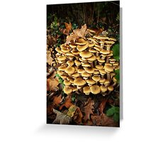 A fabulous bunch of mushrooms Greeting Card