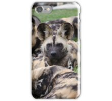 African Painted Dog iPhone case iPhone Case/Skin