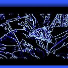 Blue Butterfly by ckredman031762